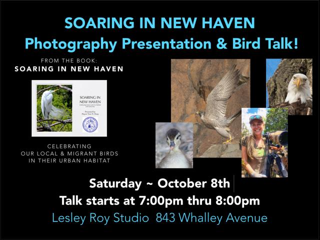 Photography Presentation and Bird Talk   Artspace New Haven